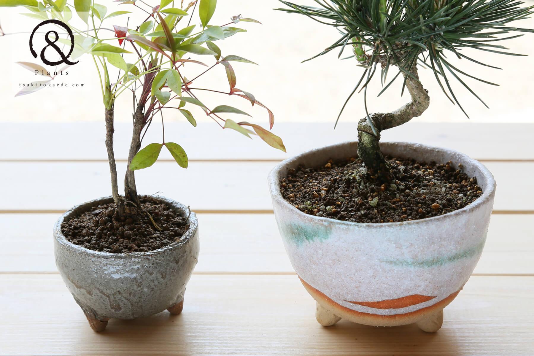 ミニ盆栽を作る